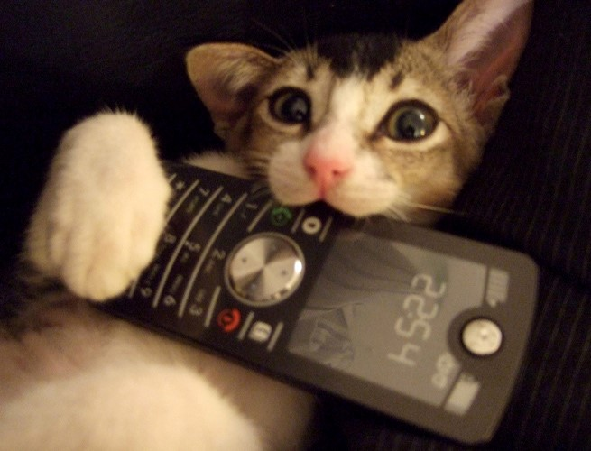 This kitty cat loves his phone.